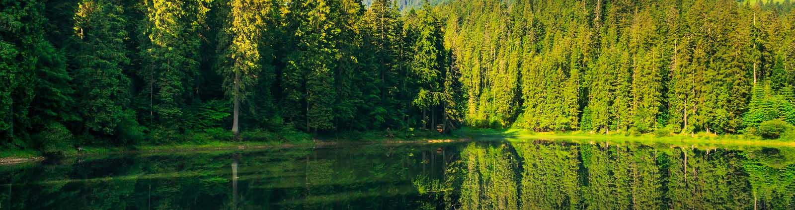 Freshness Near Forest